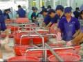金东波沙渔业公司加工现场 (6)