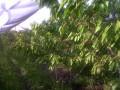 果园 Orchard (14)