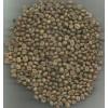 科特迪瓦咖啡豆Coffee Beans