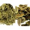 埃及番泻叶 herb