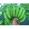 菲律宾进口香蕉 fruit