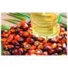 喀麦隆棕榈油 oil