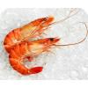 南美对虾 prawns