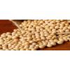 黄豆 soybeans