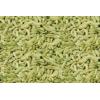印度茴香种子 Fennal Seeds