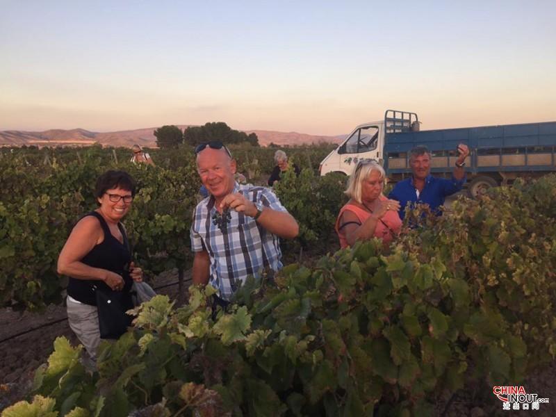 Bodega santa margarita pasion wines vino azul pasion blue chardo<em></em>nnay fotos vendimia 2016 (3)