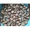 原产地印尼槟榔供应   betelnuts