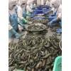 进口黑虎虾价格 BLACK TIGER SHRIMP