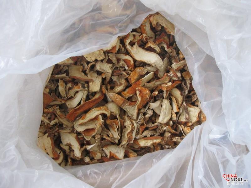 龙虾菇 2