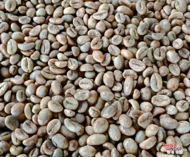 coffee robusta 5