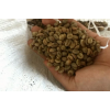 印尼苹果彩票开奖结果Robusta咖啡豆 coffee