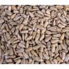 保加利亚进口葵花籽仁 Sunflower kernel