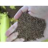 俄罗斯进口亚麻籽价格 linseed