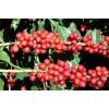 埃塞俄比亚水洗阿拉比卡咖啡 Arabica coffee