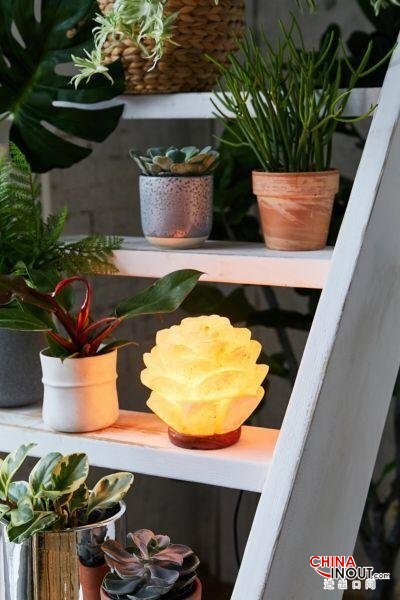 Succulent Shaped Salt Lamps