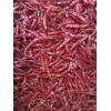 大量求購現貨印度s17辣椒 s17  chilli