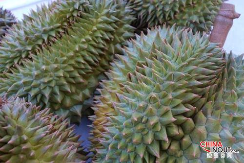 中國正式批準進口馬來西亞榴蓮2