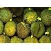 马来西亚进口猫山王榴莲供应 Musang King Durian