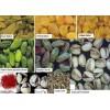 伊朗產品中國推廣服務 Iranian Products