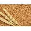哈薩克斯坦進口高筋小麥廠家供應 wheat