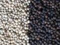 越南黑白胡椒、桂皮、八角茴香、姜黃等香料2019年6月10日行情更新