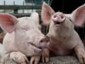 中国有意加大德国猪肉进口量,德国,法国,爱尔兰牛肉进口可能将很快开放