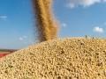 进口豆成本稳步提高,中国7月豆价或震荡上涨