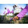 阿富汗藏红花产地厂家批发 Afghan saffron