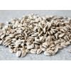 保加利亚食用级葵花籽供应sunflower kernels