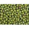 缅甸优质绿豆产地厂家直供 Mung Beans