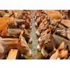 加拿大进口驴皮厂家直供 Donkey Hide