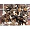 加拿大羊肚菌精品羊肚菌厂家供应 Wild Morchella