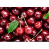 加拿大进口新鲜车厘子供应 Fresh Cherries