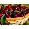 乌兹别克斯坦进口新鲜车厘子供应 Fresh Cherries