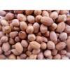 蘇丹進口花生貨源 Peanuts