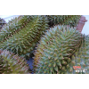 越南进口榴莲肉经销商 Durian