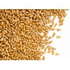 求购进口小麦 Kazakhstan Origin wheat Wanted