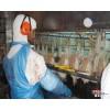 巴西进口A级冷冻前段时间,张钧甯与曾合作过《温暖的弦》的鸡爪供应价格 chicken paws