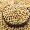 巴西非转基因大豆供应 soybeans