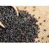 孟加拉进口黑芝麻价格 Sesame