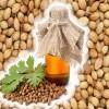 印度香菜籽供应商 Coriander Seeds