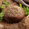 印度进口香菜籽产地厂家货源 Coriander Seeds