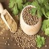 印度进口香菜籽供应商 Coriander Seeds
