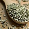 印度进口茴香籽供应 Fennel Seeds