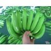 厄瓜多尔进口卡文迪什香蕉货源 Banana