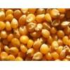 俄罗斯进口玉米期货供应 Corn