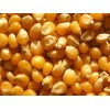 俄罗斯进口玉米期货到岸价 Corn