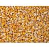 俄罗斯非转基因玉米供应 Corn