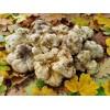求購阿爾巴尼亞白松露 Albanian fresh white truffle wanted