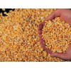 南非玉米出口商 Corn